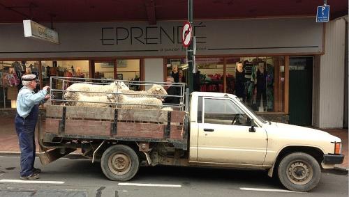 Greater Dunedin caucus arrives