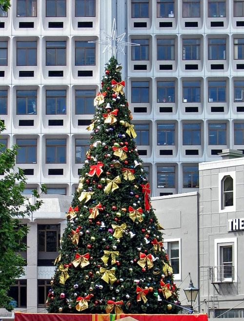 xmas tree 1lr IMG_4038