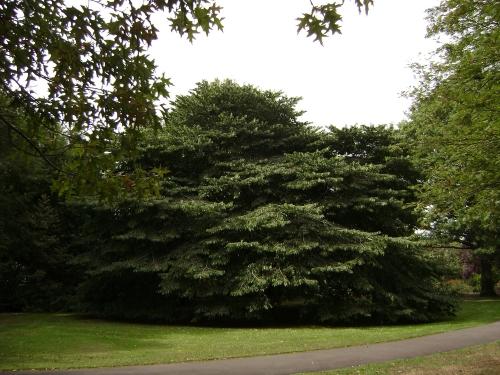 Memorial Park, Mosgiel 1.jpg