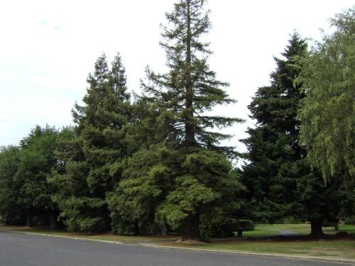 Memorial Park, Mosgiel 3.jpg