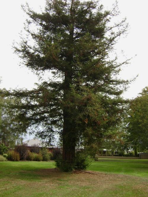 Memorial Park, Mosgiel 7.jpg