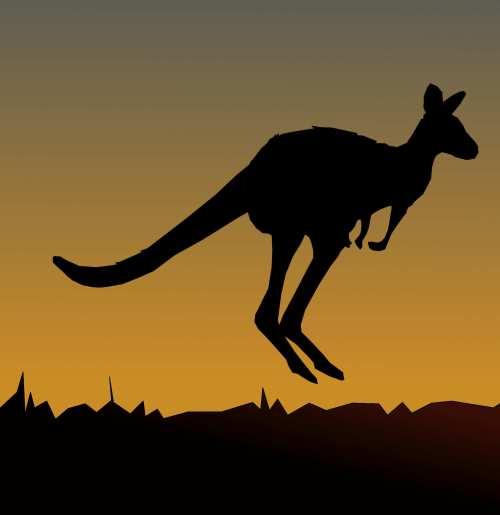 Kangaroo Jumping [galleryhip.com]