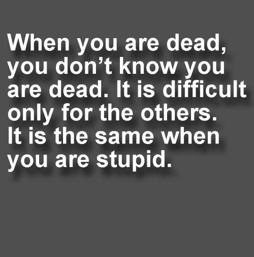 Dead Stupid