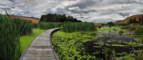 Pekapeka wetland (restored), Hawke's Bay [doc.govt.nz]