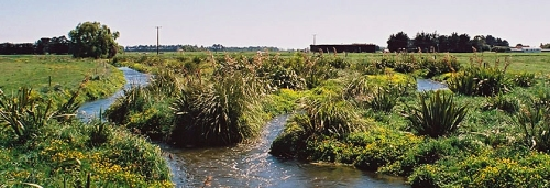 Wetland copy-header [nzarm.org.nz] 1