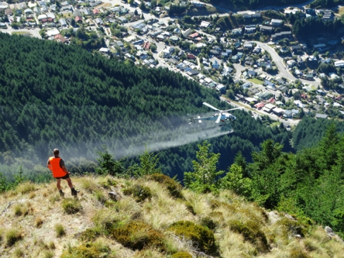 Wilding conifer management Otago - Helicopter [orc.govt.nz]