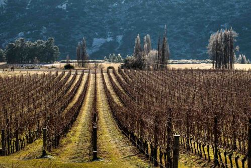 gibbston-central-otago-valli-vineyard-winetoursnz-com