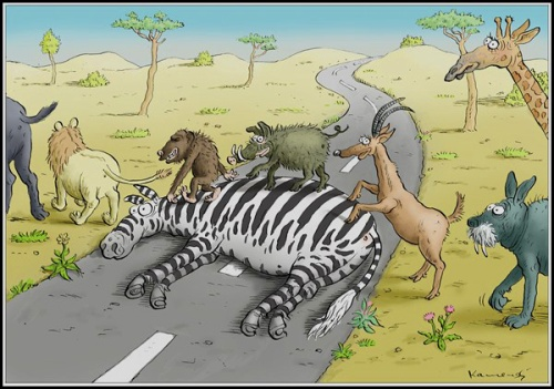 zebra-crossing-by-marian-kamensky-caglecartoons-com-1